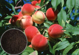 Составное изготовление Organic Fertilizer с NPK 25% для зеленой еды