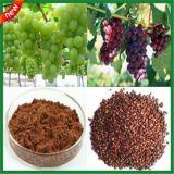 高品質95% OPCのブドウのシードのエキスのヘルスケアの栄養の補足
