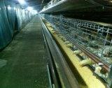 Jaulas automáticas de la capa Cage/Chicken de la parrilla de la fábrica