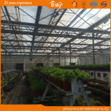 Высокое качество Glass Greenhouse с системой управления окружающей среды Auto