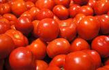 Машина чистки пузыря для Овощей-Pomodoro плодоовощ