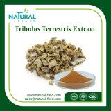 PuderTribulus Terrestris Auszug des Facotry Zubehör-bester Preis-100% natürlicher Tribuloside/Tribuloside