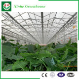 De tuin/het Landbouwbedrijf/het Groene Huis van het Glas van de multi-Spanwijdte van de Tunnel voor namen/Aardappel toe