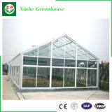 Serra di vetro usata per Growing di fiore