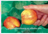 La Cina Professional Manufacturer&Exporter Food Grade pp Fruit Tray per Supermarket Display