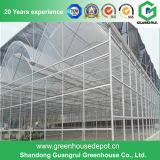 最も安く熱い販売Guangruiの農業か商業プラスチック温室