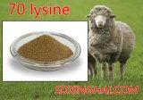 Qualité de 70%Lysine pour le bon prix