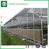 Giardino/coltivare la serra del film di materia plastica del traforo per Growing fiore/dell'ortaggio