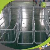 Schwangerschaft-Sau-Stall für Schwein des Geflügel-Geräts