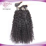 Cabelo malaio cru do Virgin de 100% que tece o cabelo Curly da extensão do cabelo humano