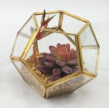 Il Terrarium artificiale dei grafici della geometria pianta il Succulent conservato in vaso