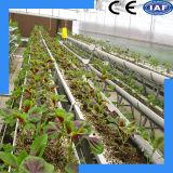 Système hydroponique de culture de solution d'éléments nutritifs