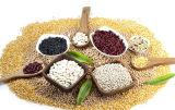 세륨 증명서를 가진 Ht 상표 옥수수 곡물 곡물 선반 기계