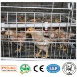 La poulette neuve de ferme avicole met en cage le système de matériel (un type le bâti)