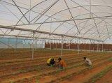 Multi-Überspannung Agricultural Film Greenhouse für die Tomate Wasserkultur