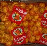 Boa qualidade do mandarino doce fresco do bebê