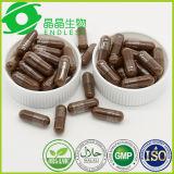 Lingzhi Auszug-Puder-Kapsel-organische KräuterantiKrebsmedikamente