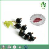 Extrato natural da passa de Corinto preta de 100% com anticianinas 10%, 25% por HPLC, no. de CAS: 68606-81-5