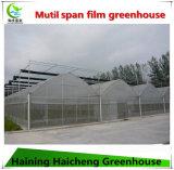 Invernadero de la película del palmo de Mutil para Growing vegetal