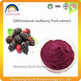 Extrait de fruit pur et pur de fruits de mûre extrait de fruit Morus Alba