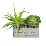 Jardín/Succulents caseros/de la oficina y áloe artificiales Vera de los bonsais