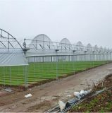 농장 다중 경간 PC 장 녹색 집
