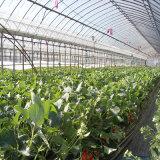 Парник полиэтиленовой пленки Multispan для Vegetable садоводства цветка