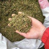 Efedra caliente Sinica/té chino de la venta de Ephedra/Ma-Huang
