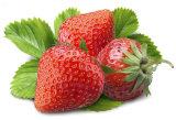 Pó natural do extrato da morango do extrato da fruta