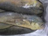 Prezzo all'ingrosso di Mahi Mahi dei frutti di mare di Seafrozen