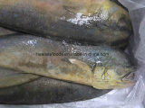 Sale caldo Frozen Whole Round Mahi Mahi per Market