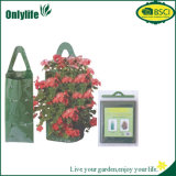 No. 80336 sacchetti della fragola di giardino crescenti
