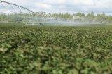 Grande impianto di irrigazione del perno del centro del terreno coltivabile