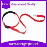 バンジーは実行に揺れ、歩くことのための自由な犬の鎖を渡す