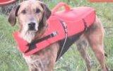 O fornecedor marinho manufatura o colete salva-vidas inflável da espuma do porco do gato do cão de animais de estimação
