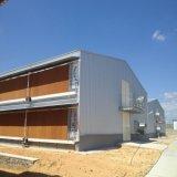 Новая ферма цыпленка стальной структуры конструкции