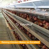 тип автоматическая цыплятина цыпленка наслаивает клетки