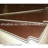 Birch Film Faced Contraplacado 72 Hours The Boiling Water Resistant