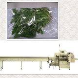 Empaquetadora fresca de los tallarines (FSD 590)