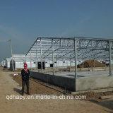 Construction légère de ferme avicole de structure métallique pour le poulet