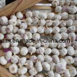 Aglio bianco fresco del nuovo raccolto (4.5cm, 5.0cm, 5.5cm, 6.0cm)