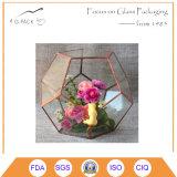 Il tipo giardino di vetro della sfera del vaso della piantatrice dei Terrariums imbottiglia i Terrariums