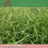 12:1 de propagation naturel d'extrait de 100% Hedyotis