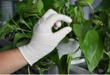 Верхнее цена перчаток латекса перчатки дешево устранимое водоустойчивое медицинское эластичное
