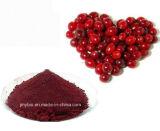 自然な食糧補足のElderberryのエキス、アントシアニン5%-25%