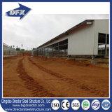 Здания птицефермы стальной структуры