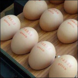 [برينتينغ ينك] صالح للأكل لأنّ بيضات طباعة شاملة سطحيّة