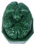 Modello frontale della sezione del cervello umano