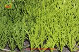 Синтетическая трава для футбола с толщиной пряжей травы PE