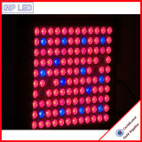 Beste 600W Volledige leiden van het Spectrum kweken Lichten met Veg/Bloei